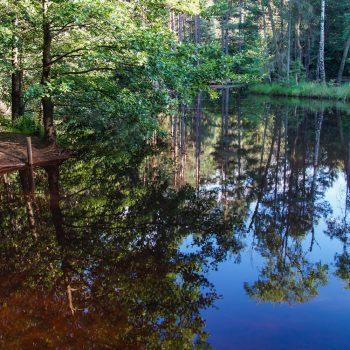 Am Stausee mit Blick auf die Insel, Dresdner Heide