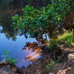 Spiegelung im Stausee, Wanderung Dresdner Heide