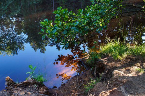 Im Wald – Dresdner Heide