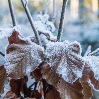 Natur im Winterschlaf, Dresdner Heide