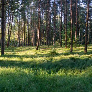 unterwegs auf kleinen Pfaden, Dresdner Heide