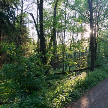 Am Neuen Weg, Dresdner Heide