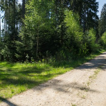 Wanderweg Gabel, nach links geht es auf den Bischofsweg, Dresdner Heide