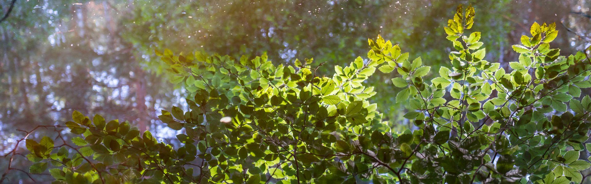 Dresdner Heide Naturfotografie