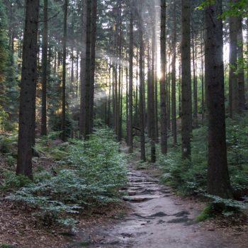 Aufstieg zum Falkenstein, Morgenstimmung im Schießgrund