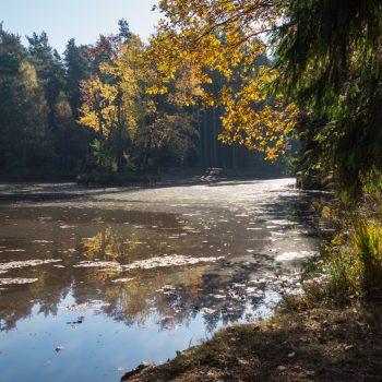 Herbststimmung am Stausee, Dresdner Heide