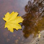Blatt im Stausee, Herbst in der Dresdner Heide
