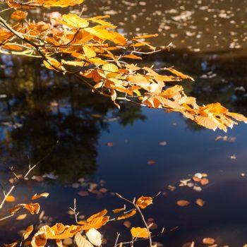 goldene Blätter am Ufer des Stausees