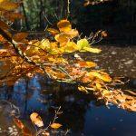 Herbstwald, goldene Blätter am Ufer des Stausee
