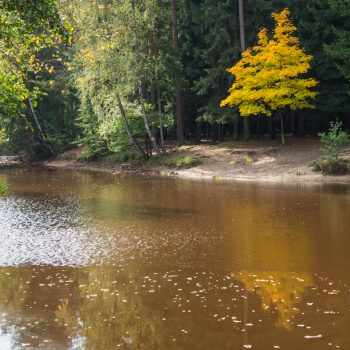 farbige Blätter am Stausee, Dresdner Heide