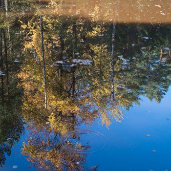 Spiegelung am Stausee, Dresdner Heide