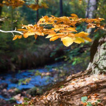 Herbstwald, Blätter an der Prießnitz