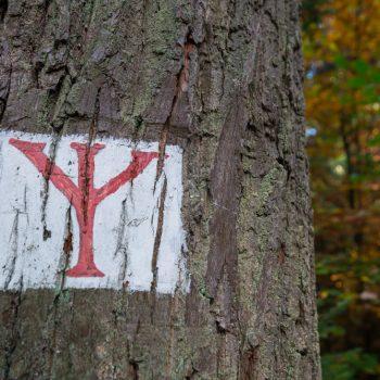 Gabel, historisches Waldzeichen Dresdner Heide