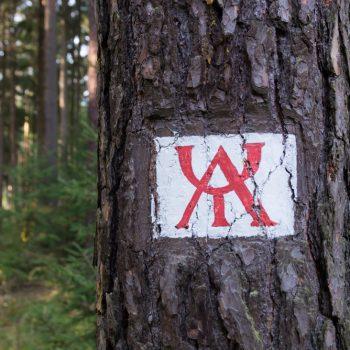 Zirkel, historisches Waldzeichen Dresdner Heide
