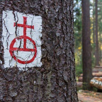 Reichsapfel, historisches Waldzeichen Dresdner Heide