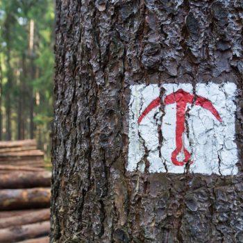 Verkehrter Anker, historisches Waldzeichen Dresdner Heide
