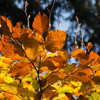 Herbstwald, Blätter in der Dresdner Heide