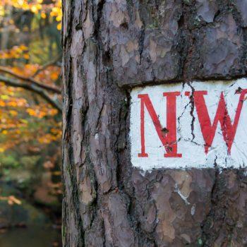 Neuer Weg, historisches Waldzeichen Dresdner Heide