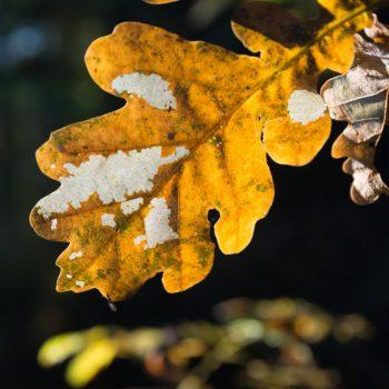 herbstliche Blattfärbung in der Dresdner Heide