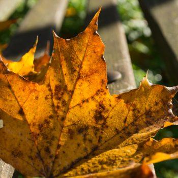 herbstliche Blätter im Garten