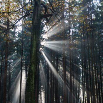 Morgenstimmung im Herbstwald