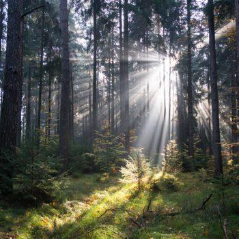Lichtstimmung am Morgen, Dresdner Heide