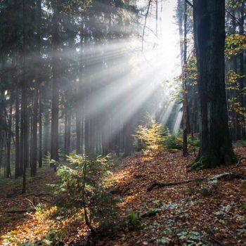 Lichtstrahlen im Wald, Morgenstimmung Dresdner Heide