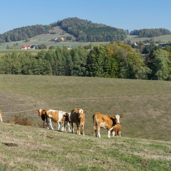 Wanderung bei Goßdorf mit Blick auf den Gickelsberg