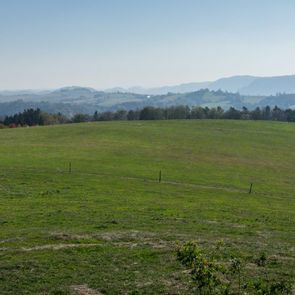 Ausblick vom Hankehübel nach Südosten in Richtung Schrammsteine