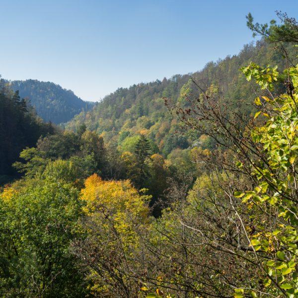 alter Mischwald am Felsenpfad zum Goßdorfer Raubschloss