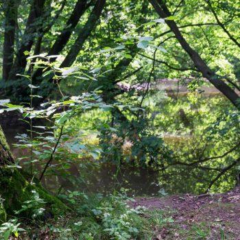 Hüttertal, Spiegelung am Ufer der Großen Röder
