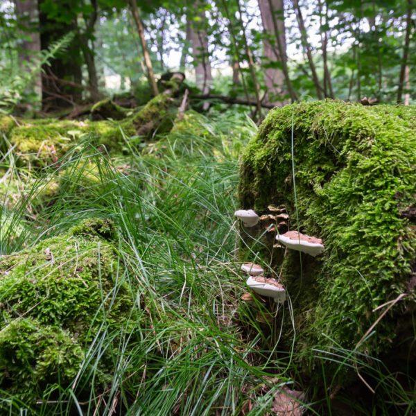 Moos, Pilze und Gräser am Wegesrand im Hüttertal