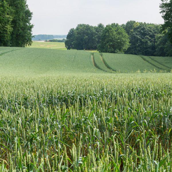 Felder nahe Felixturm bei Wallroda, Wanderung Hüttertal