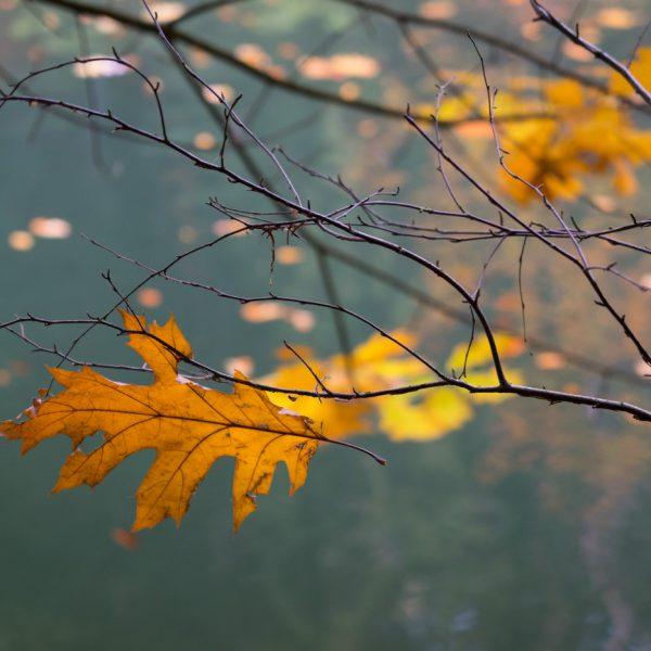 Herbstlaub am Amselsee bei Rathen