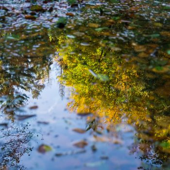 herbstliche Spiegelung, Goldener Herbst in der Heide