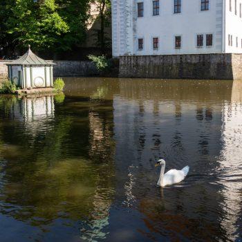 Spiegelung auf dem Schlossteich in Schönfeld, Radtour im Hochland