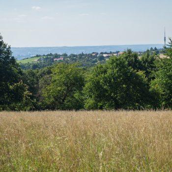 Ausblick vom Hochland zum Fernsehturm und auf Dresden