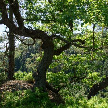 Blick durch die Bäume auf dem Hockstein