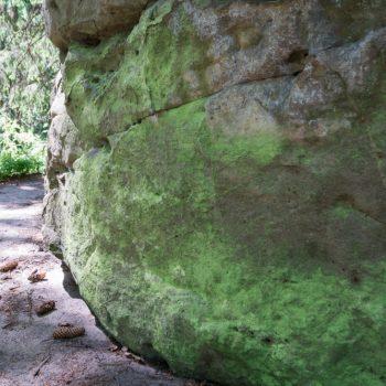 Schwefelflechte am Sandstein