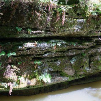 Reflektionen des Wassers, am Ufer der Polenz