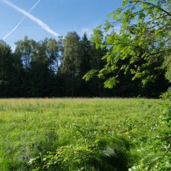 Räumichtwiese, Wanderweg nach Hohnstein