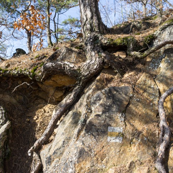 Wanderweg oberhalb der Pillnitzer Weinhänge
