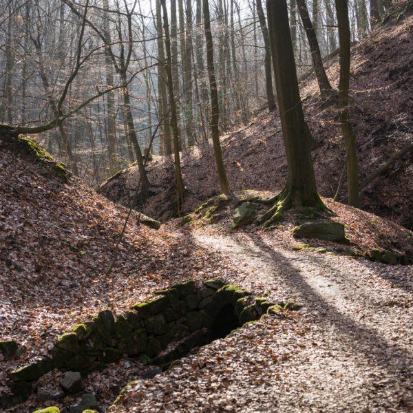 Friedrichsgrund bei Pillnitz
