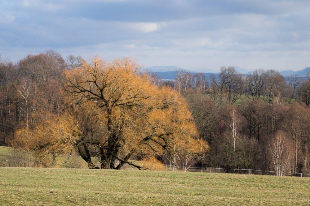 Schönfelder Hochland, Blick ins Elbsandsteingebirge