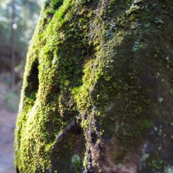 bemooster Fels am Wegesrand, Halbenweg bei Hohnstein