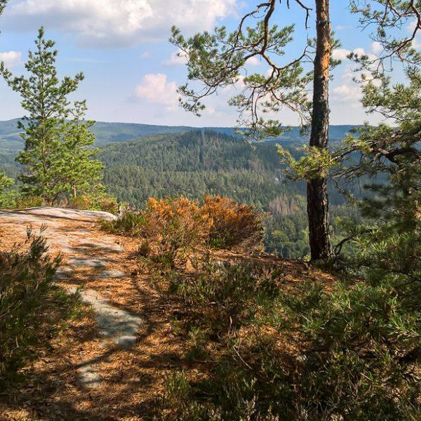 Auf dem bewaldeten Gipfel des Kleinen Lorenzstein