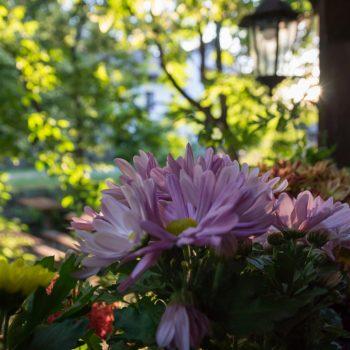 Blüten im Abendlicht, Heidemühle Dresden