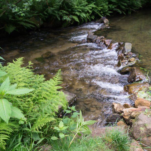 im Tal der Kirnitzsch, Wanderung Kuhstall