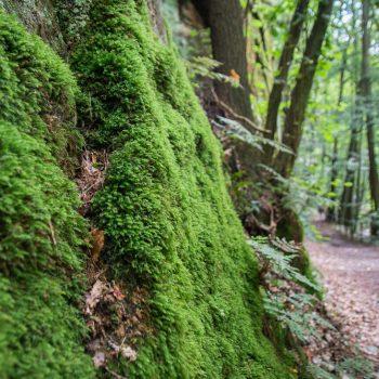 bemooste Felswand im Liebethaler Grund, Malerweg