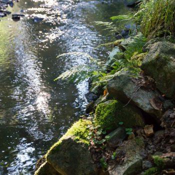 Am Ufer der Prießnitz in der Dresdner Heide